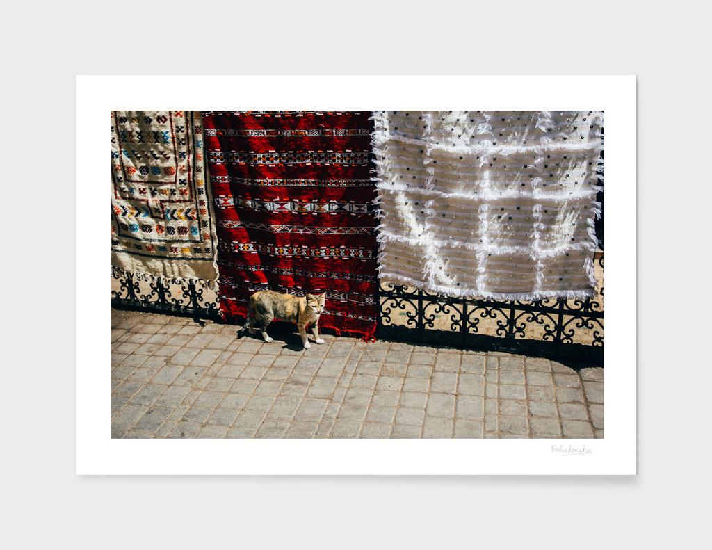 Moroccan Cat