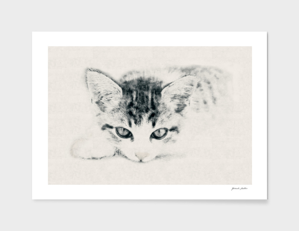 Young Cat - Carcoal, Pencil Drawing