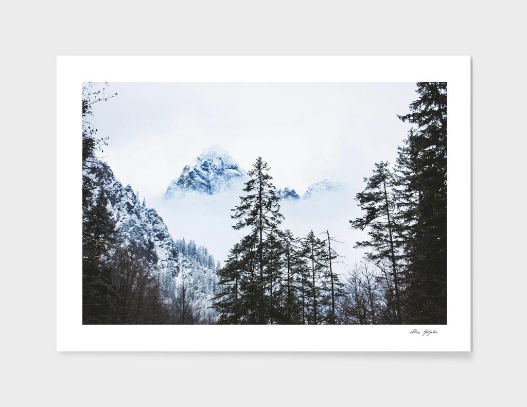 Pine Forest againts Snow Peak