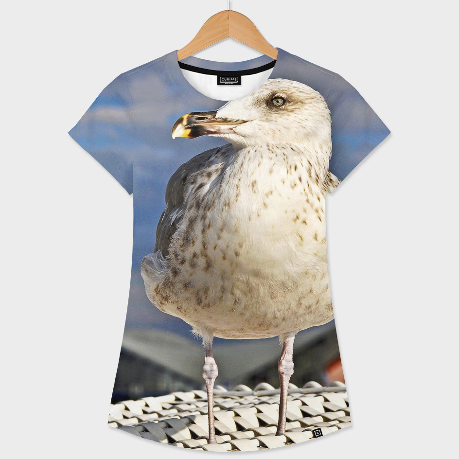 Magic Seagull on the Baltic Sea