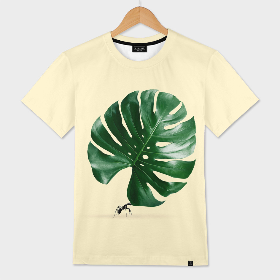 MONSTERA ANT