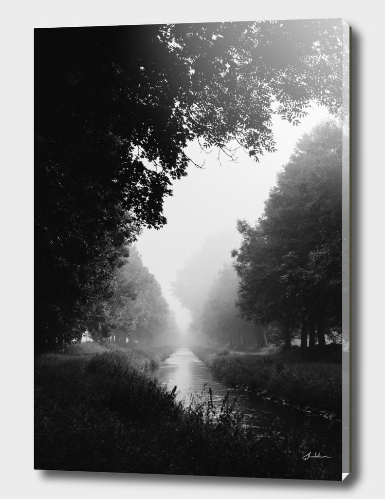 Flowing morning fog