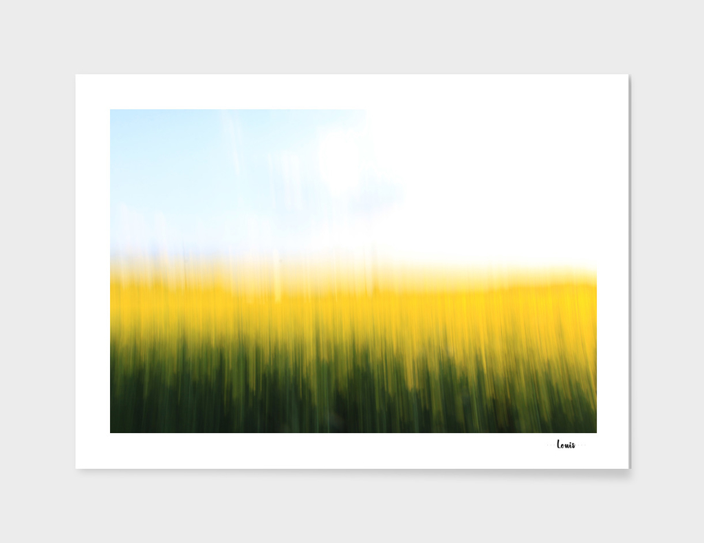 fields of gold no. o1