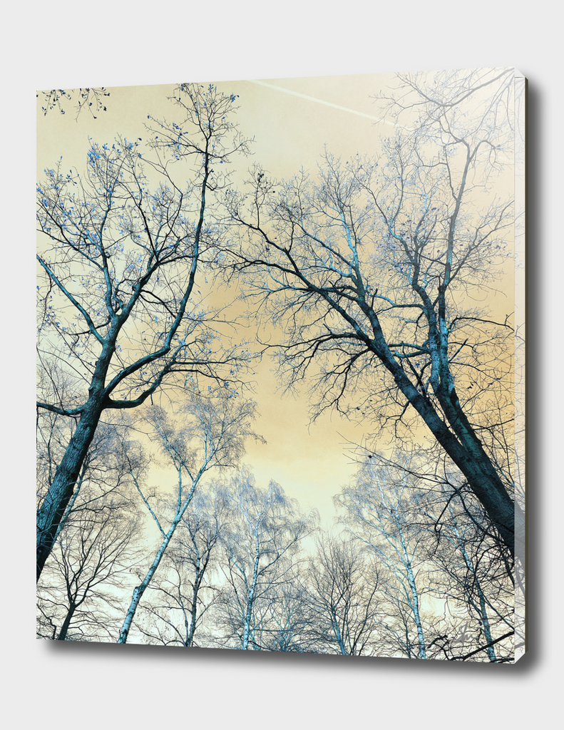 Trees nature infrared landscape