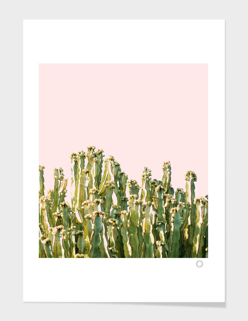Cactus Blush