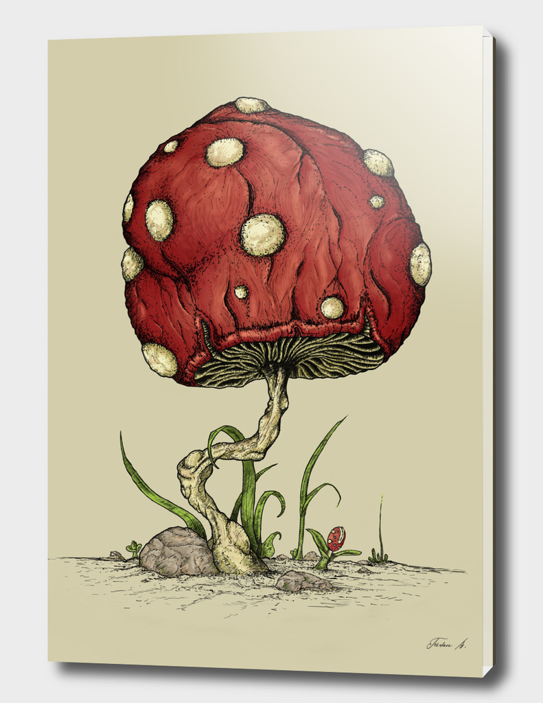 Grow Mushroom