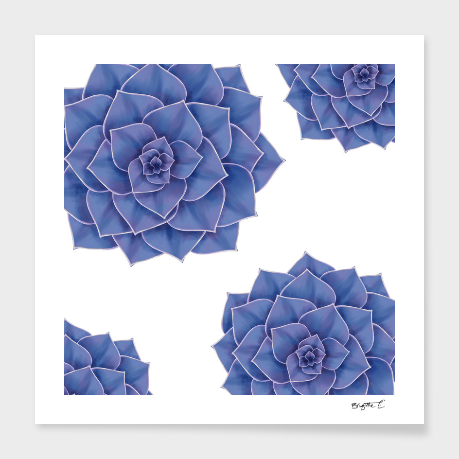 Elegant Big Purple Echeveria Design