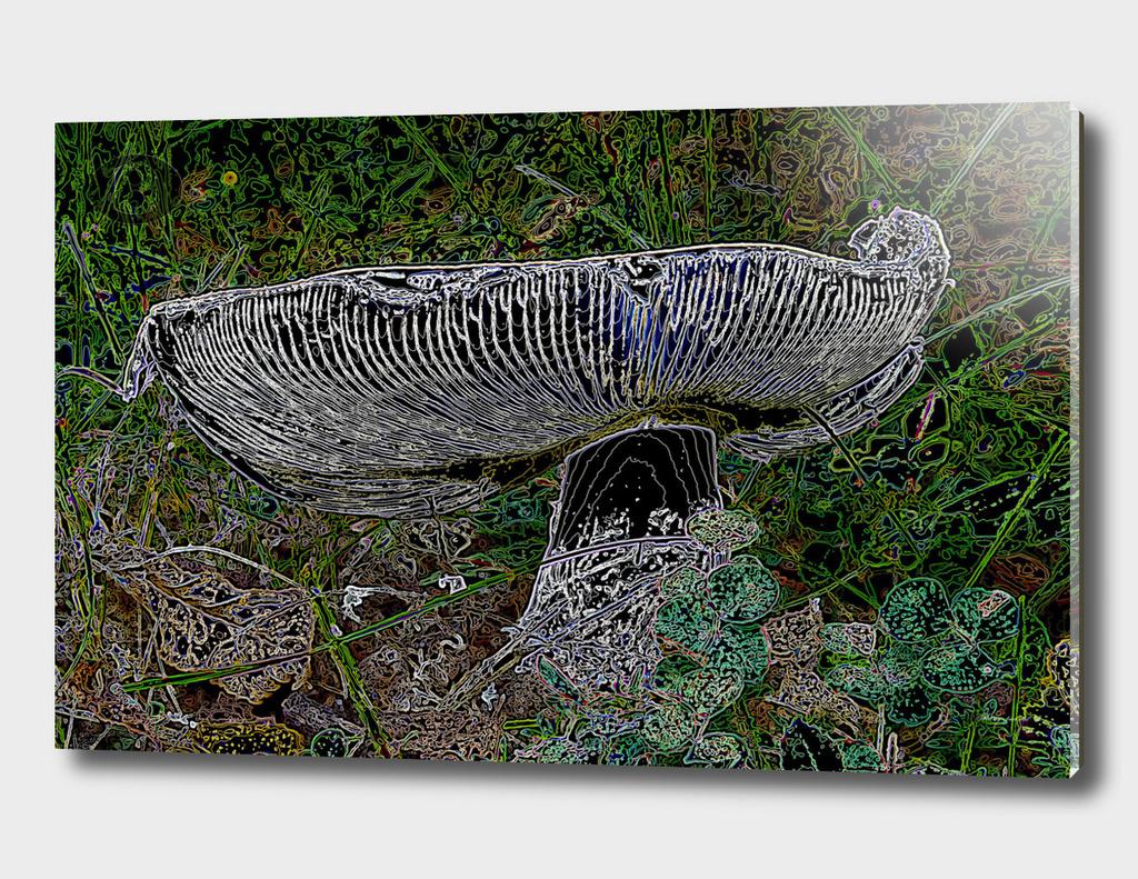 Mushroom from Banstol