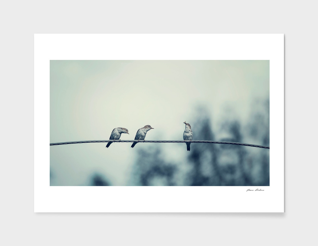 Three birds on wire, one of the bird has a food