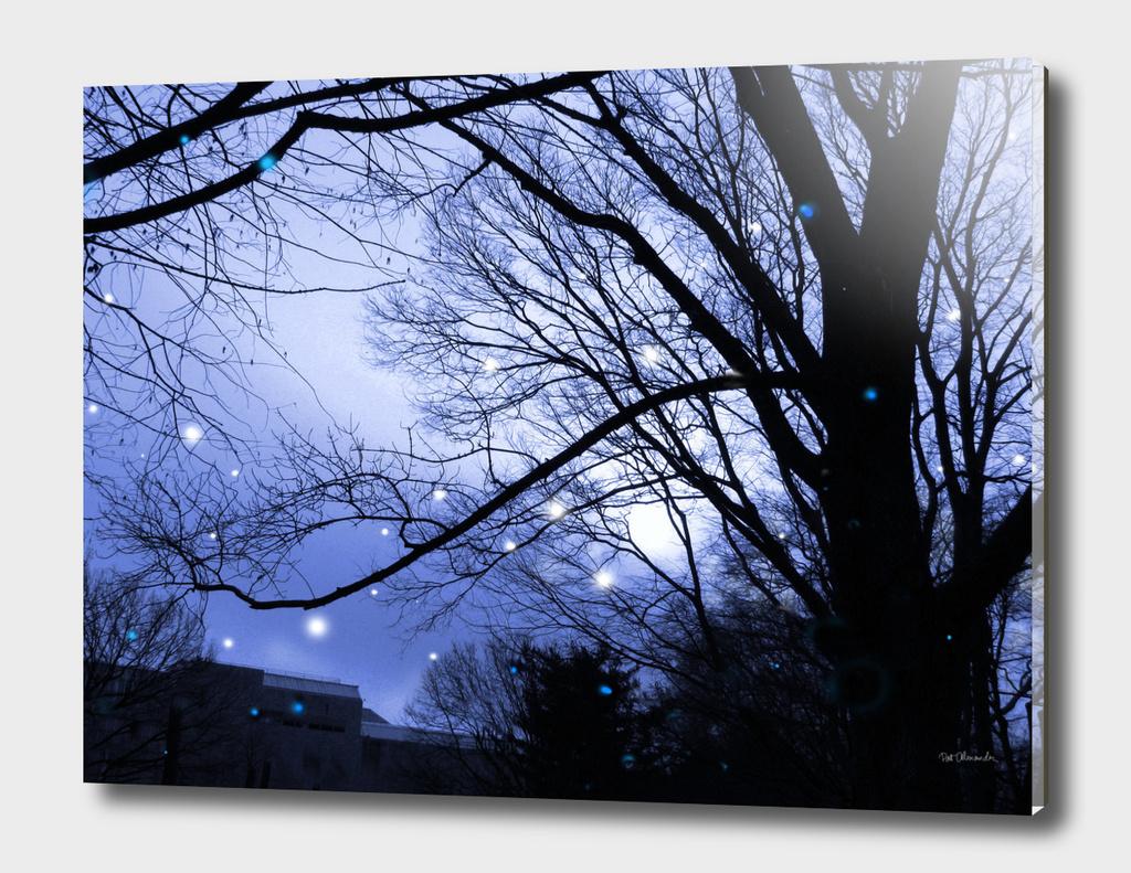 Remembering Fireflies