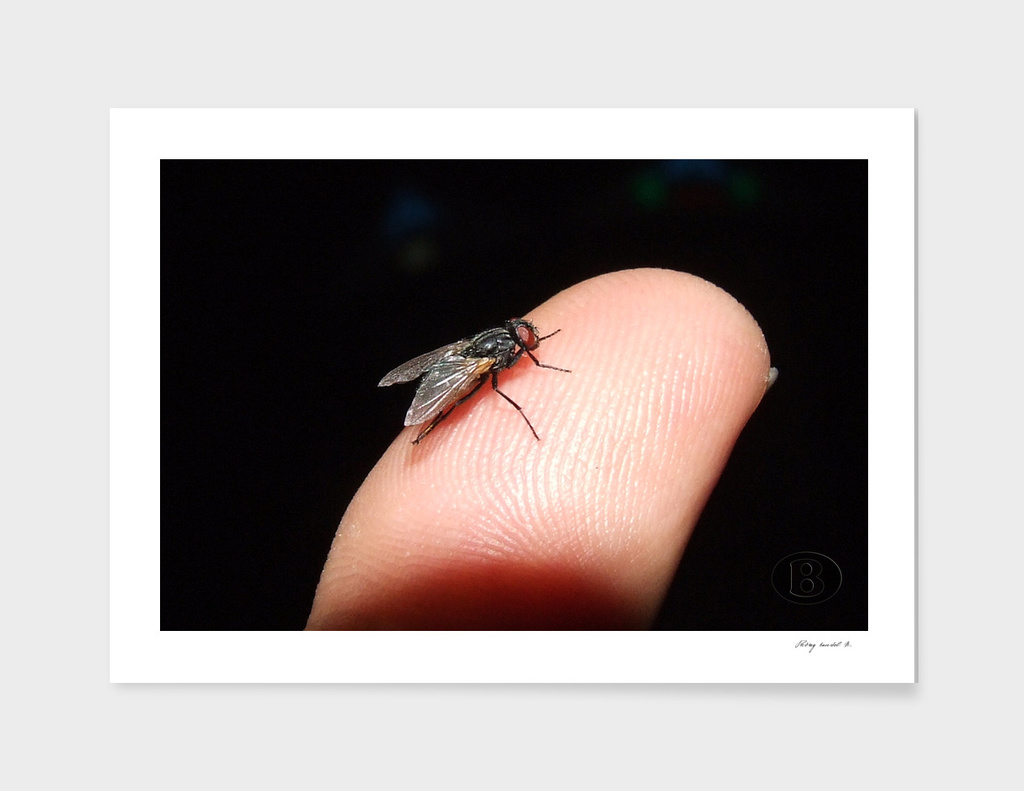 Fly on the forefinger B