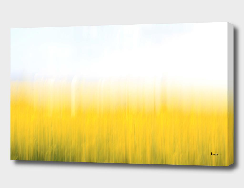 fields-of-gold-99