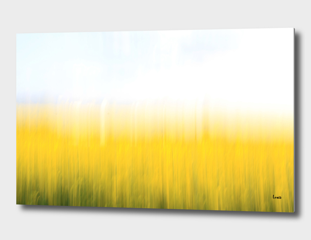 fields-of-gold-99