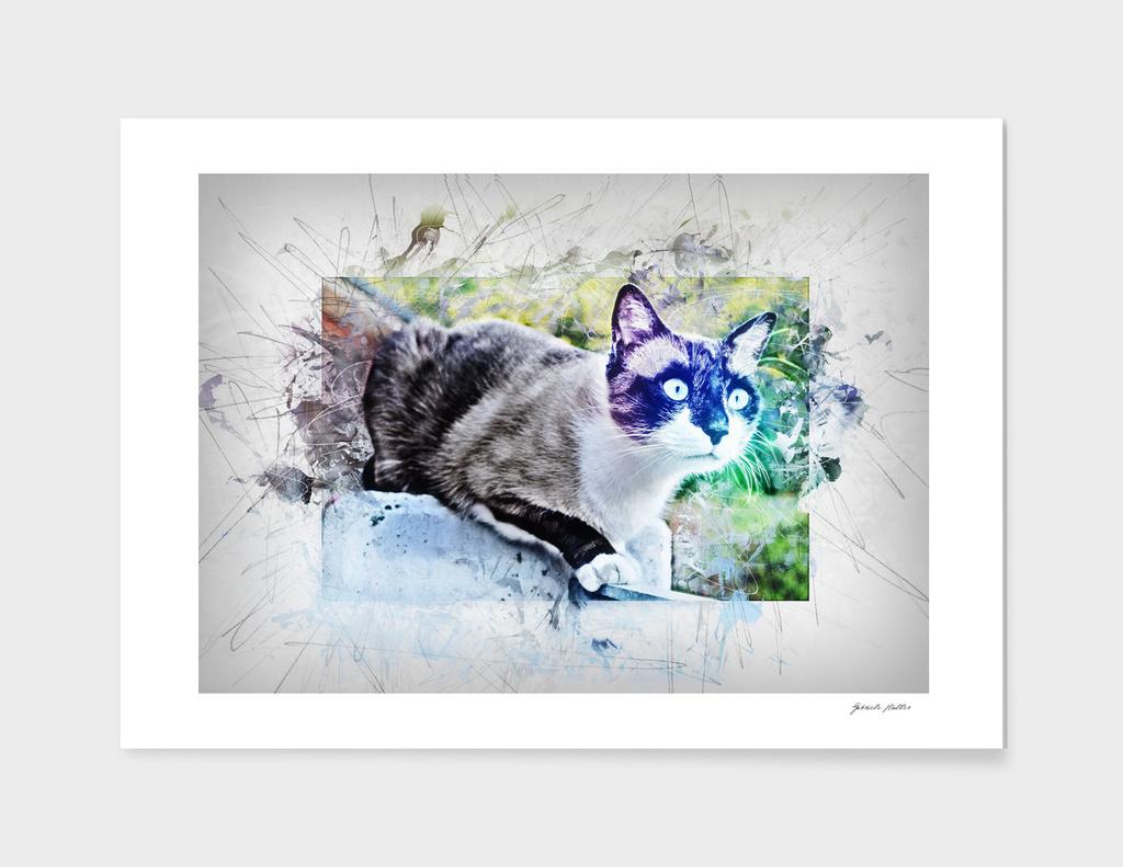 Cat on Stone - Watercolor, Splash