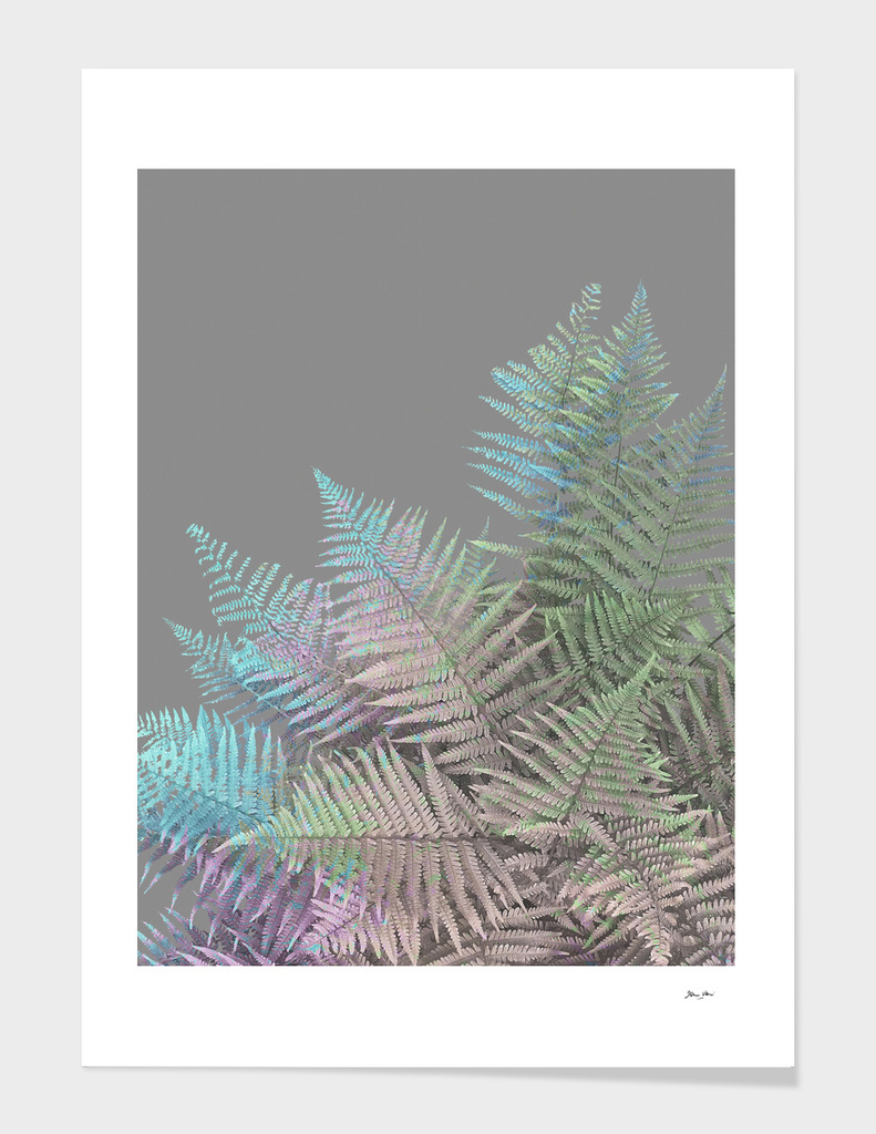 Rainbow Fern on grey
