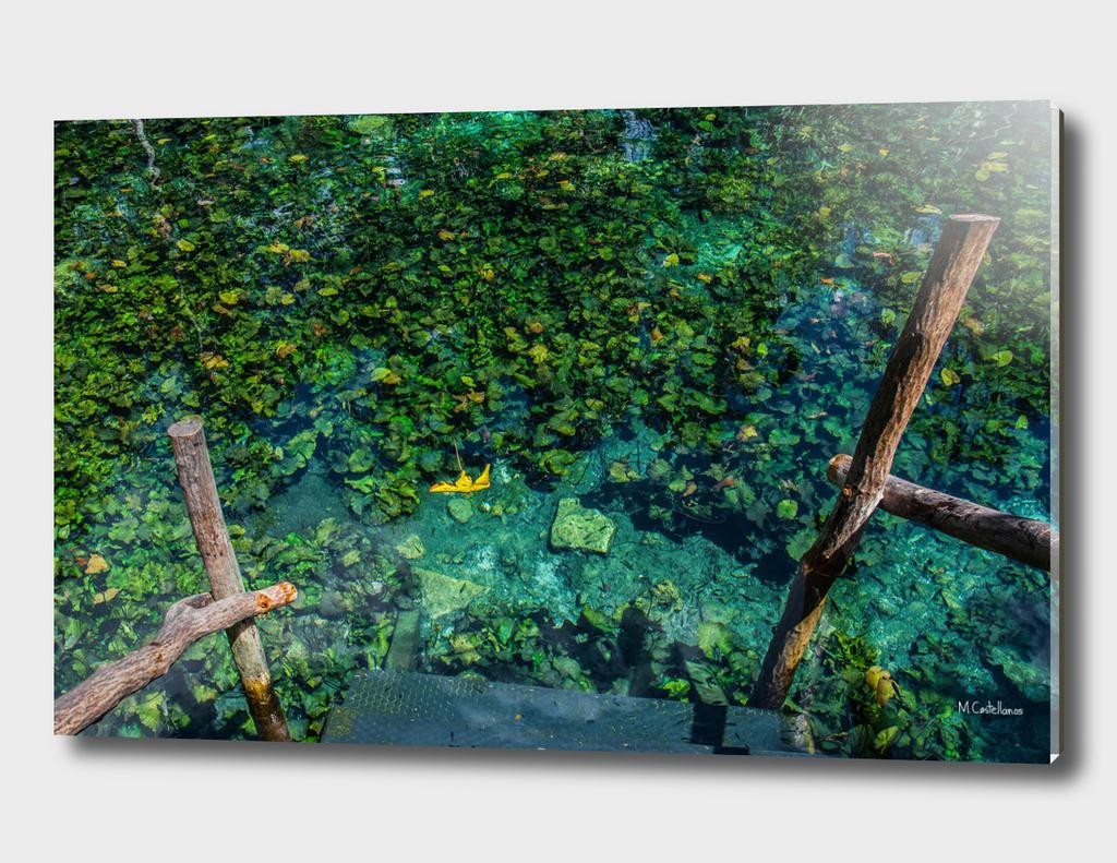 Cenote, Quintana Roo. Mexico