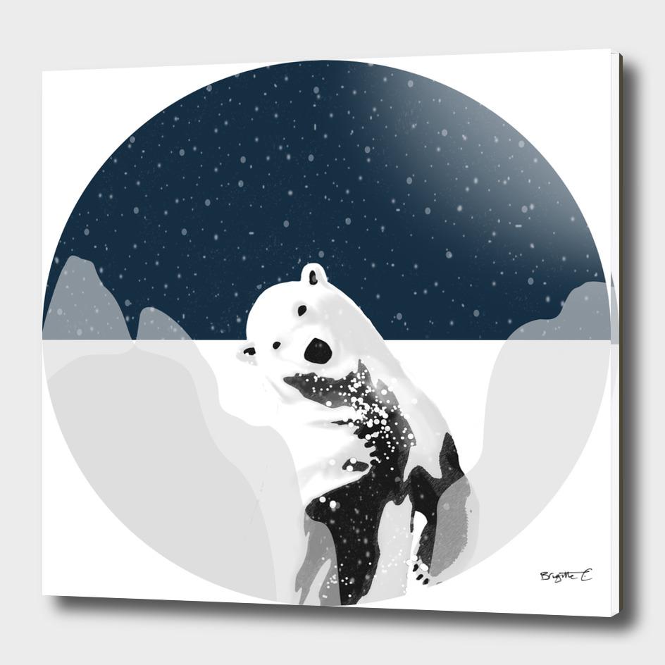 Unique Polar Bear Scene