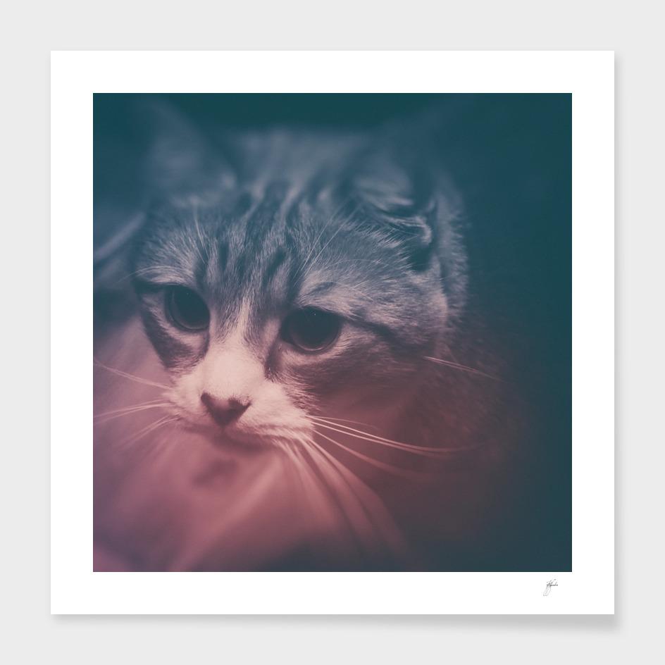 photo cat Stefan