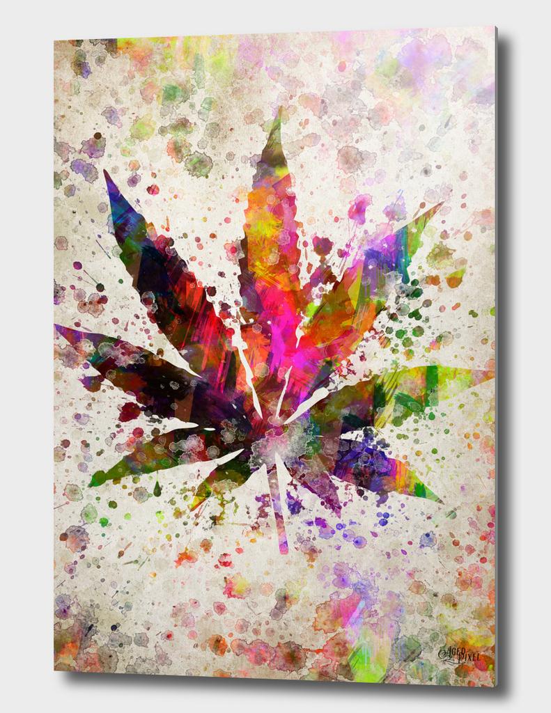 Marijuana Leaf in Color