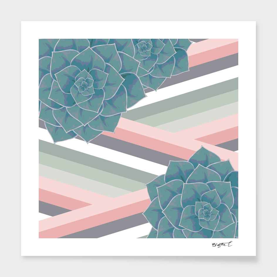 Pastel Big Echeveria Design