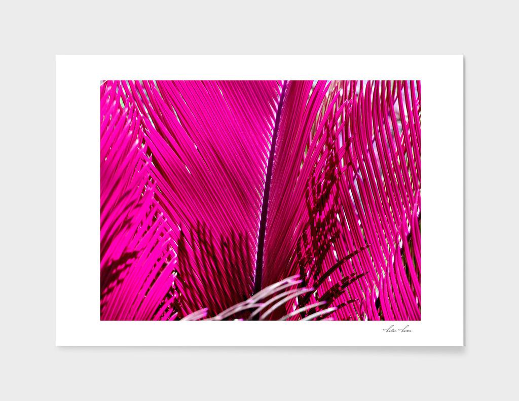 Ruby Palm