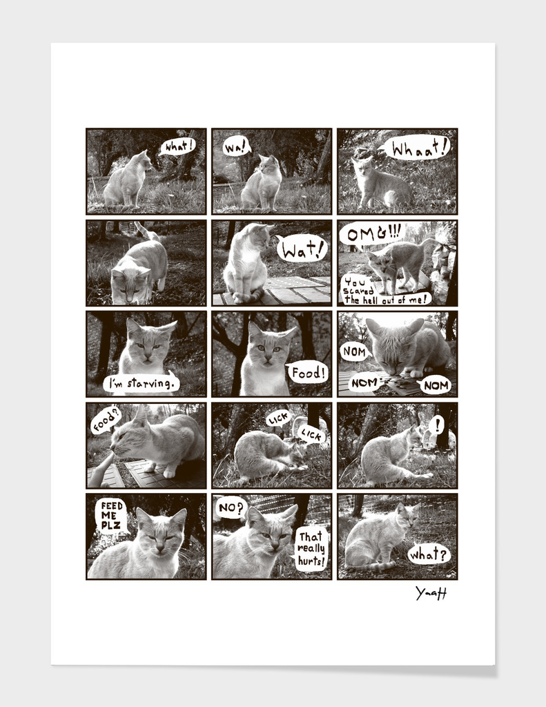 A Cat Story