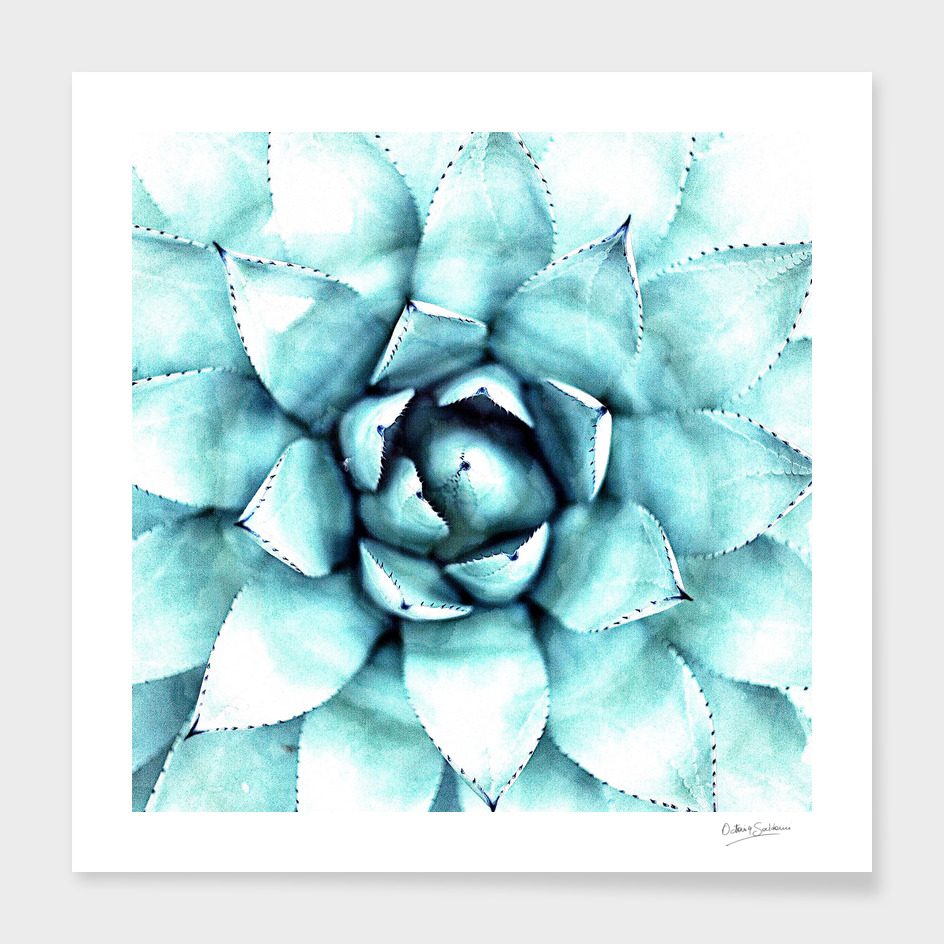 Succulent - A Watercolour Mandala