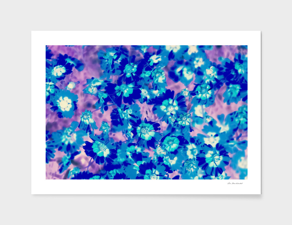 blooming blue flower abstract with pink background