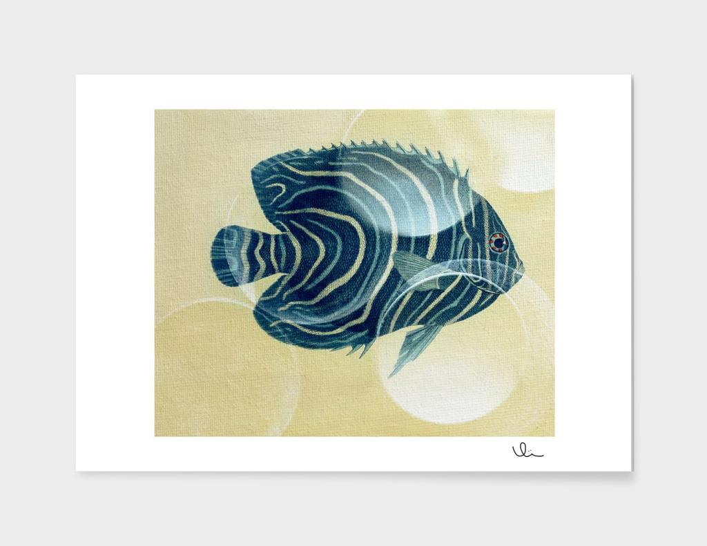 Fish Between Circles