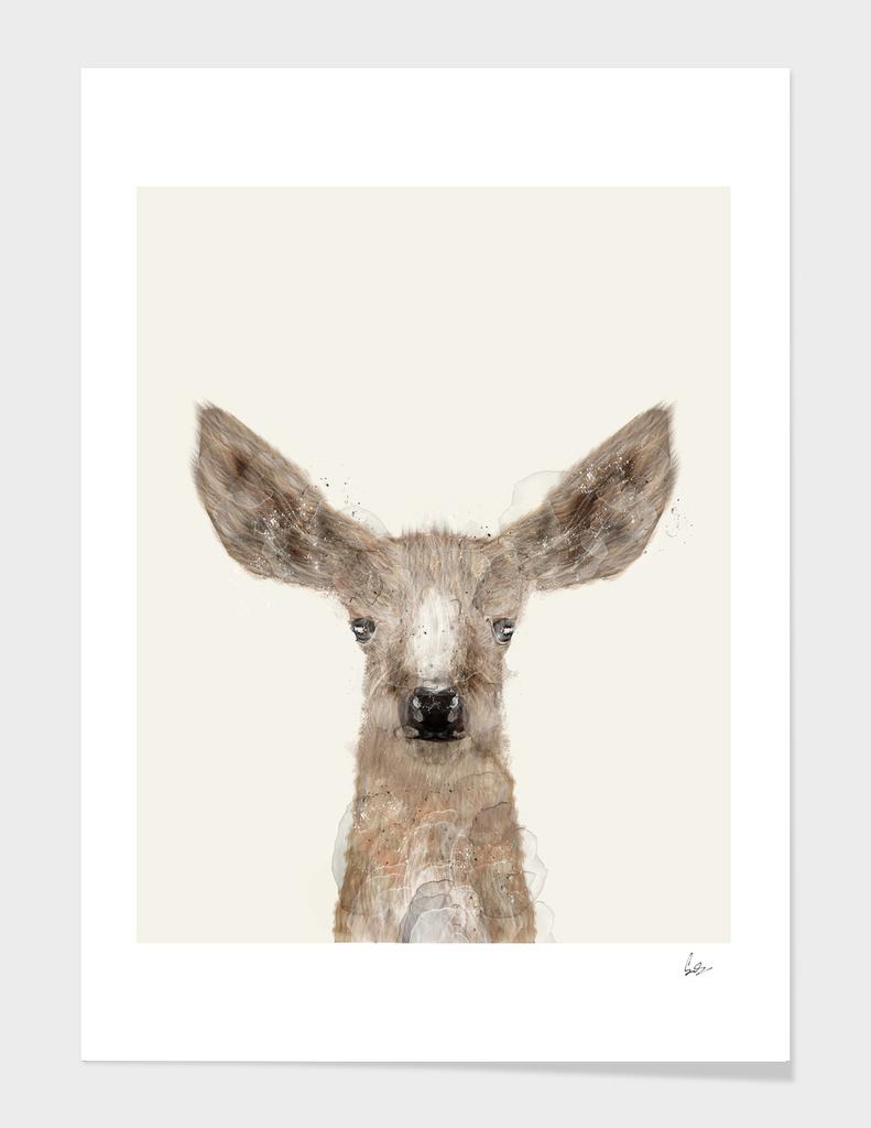 little deer