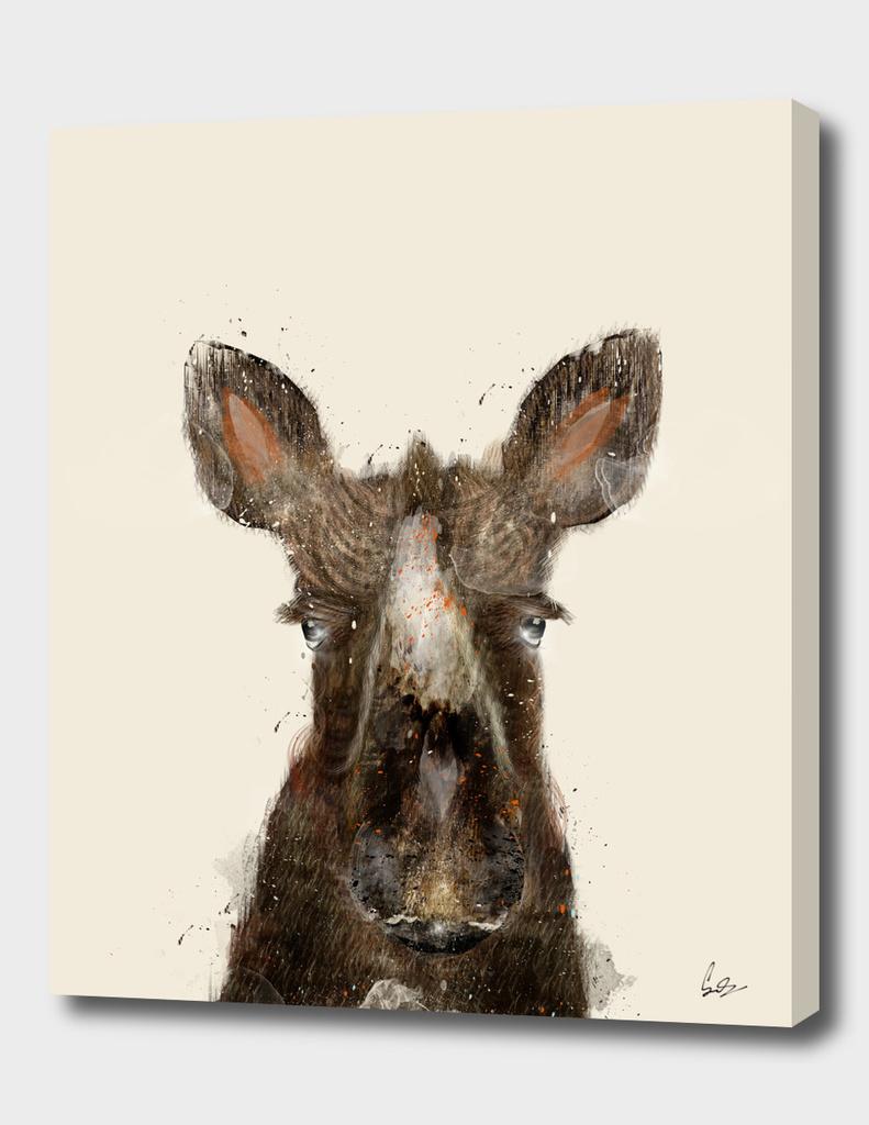 little moose