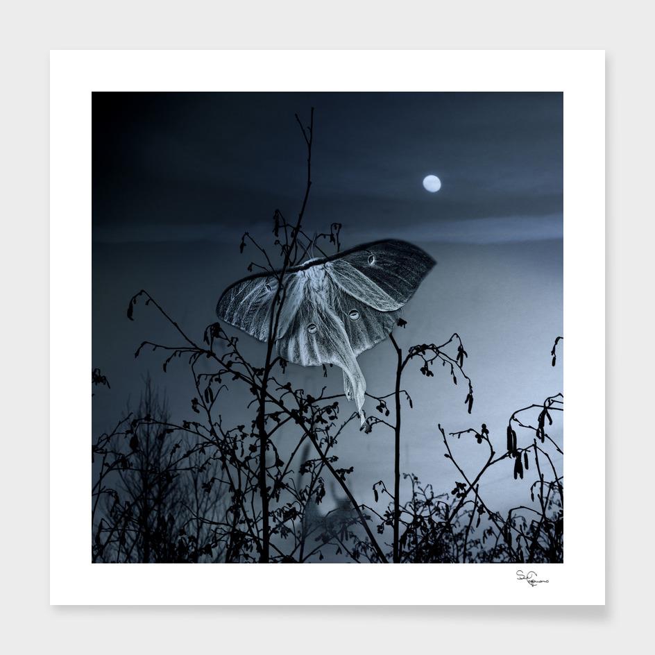 Luna Nights