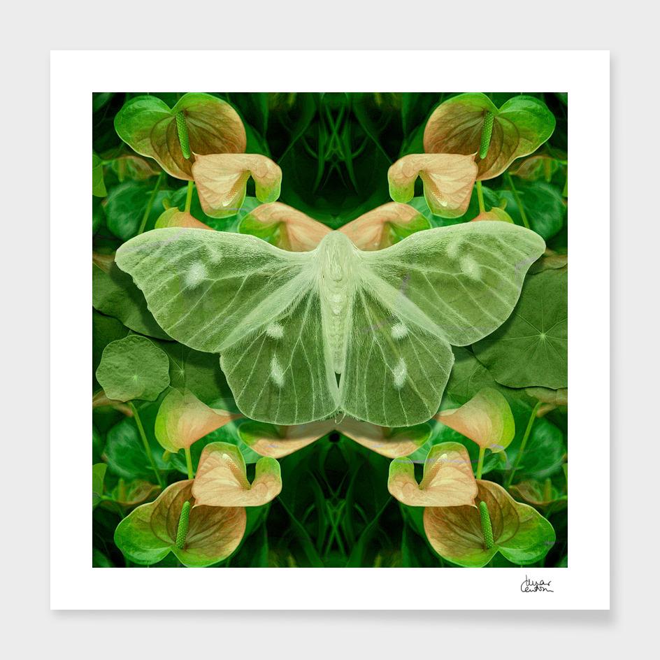 Green Glow Butterfly