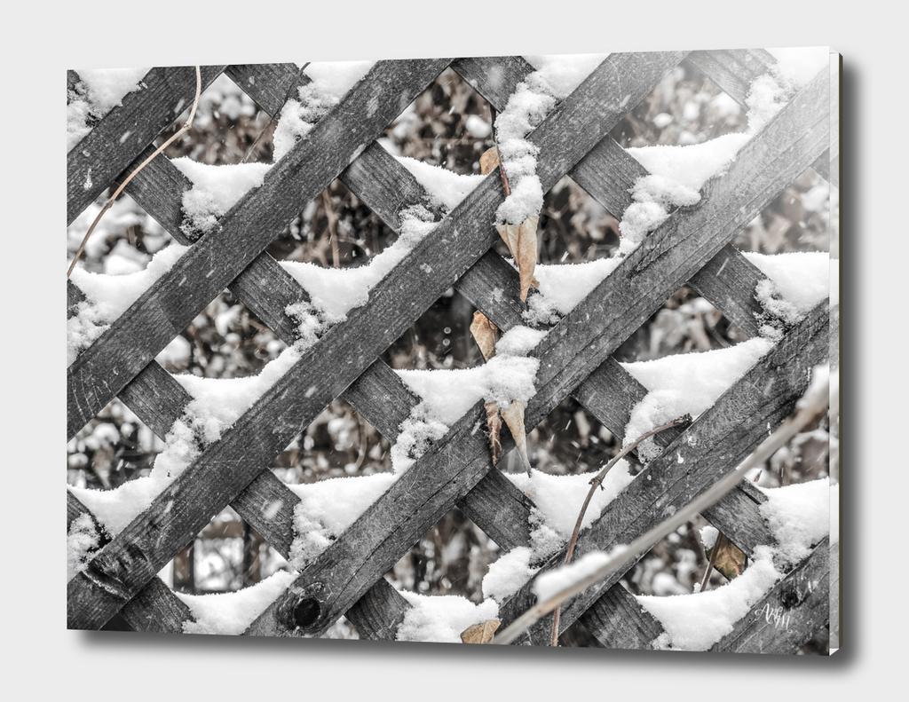 January Snow Fence