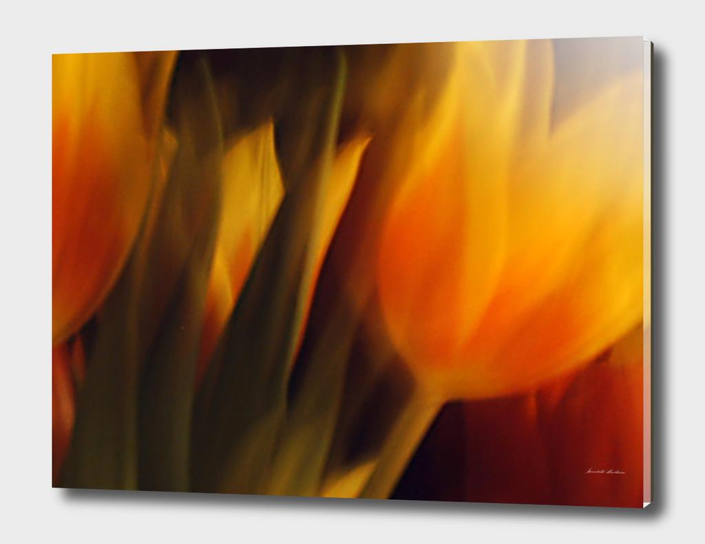 Flowers of Fire