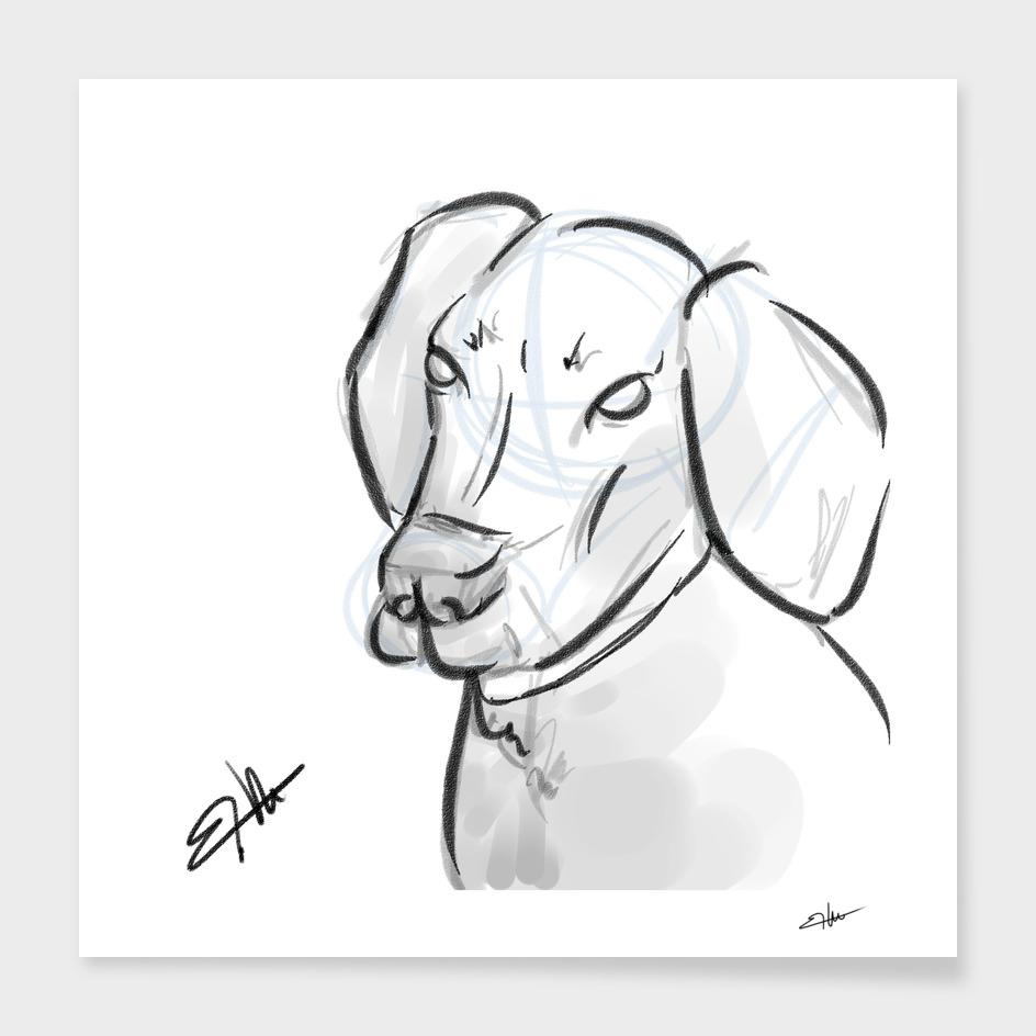 Layca portrait