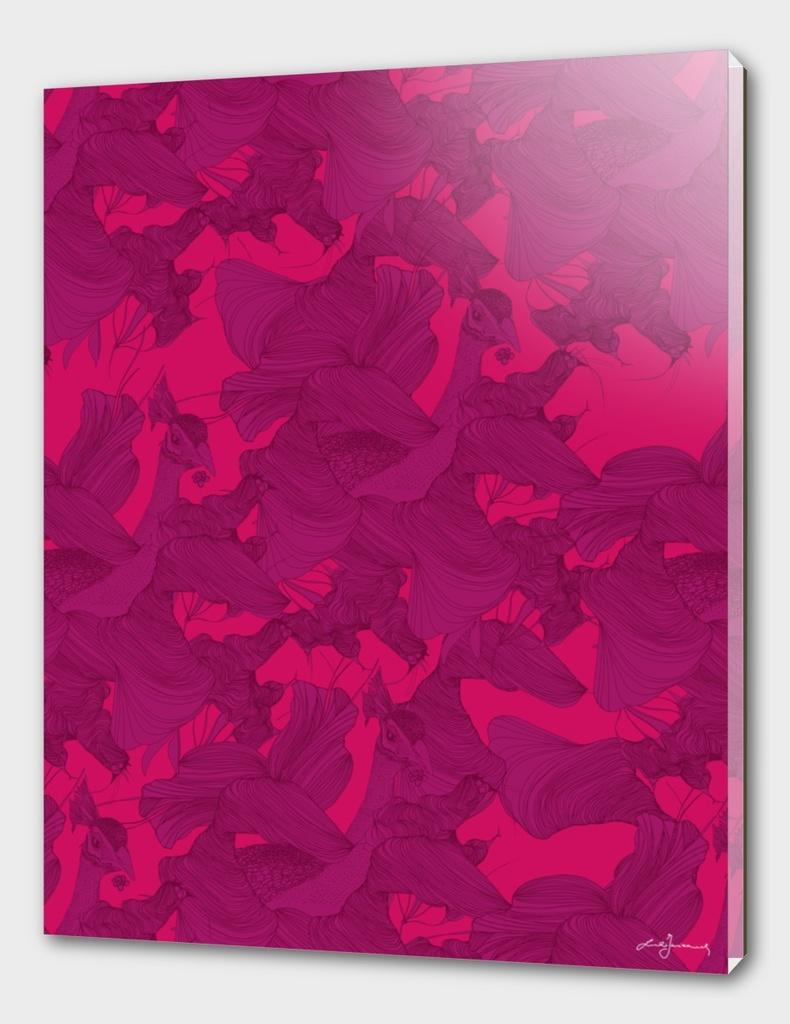 pavone rosa