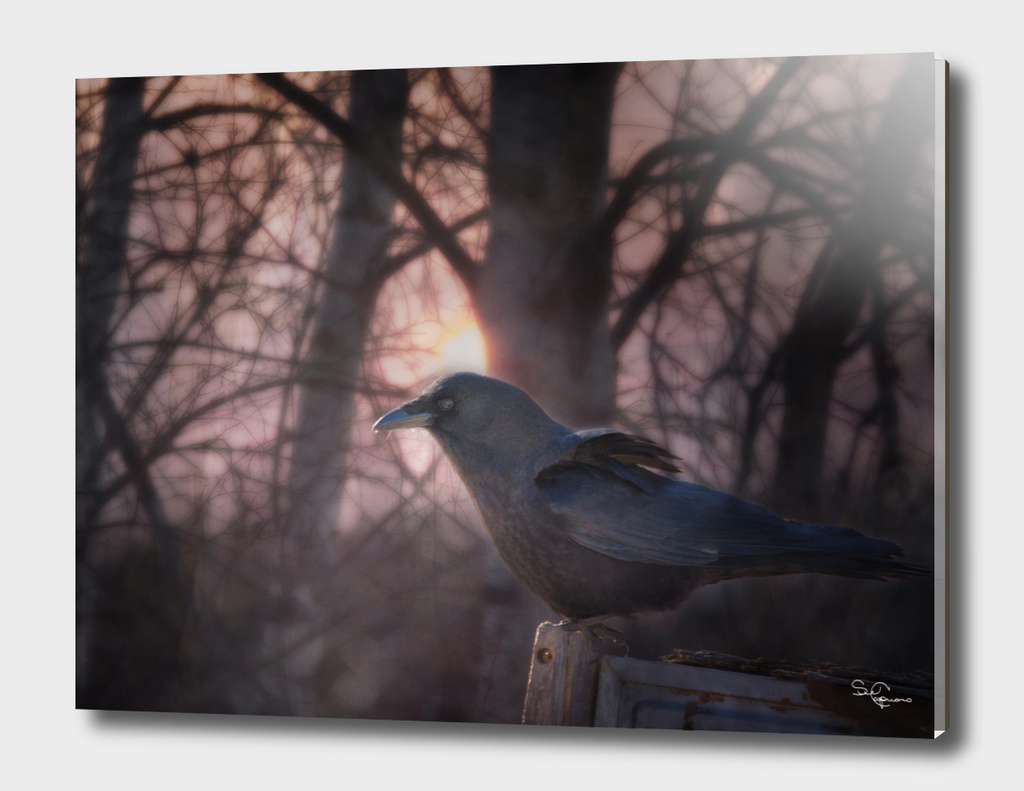 Raven Dawn
