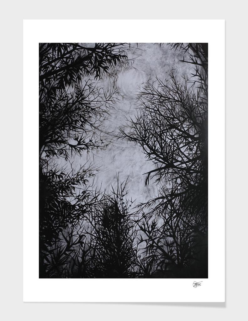 Tree - Declination VII