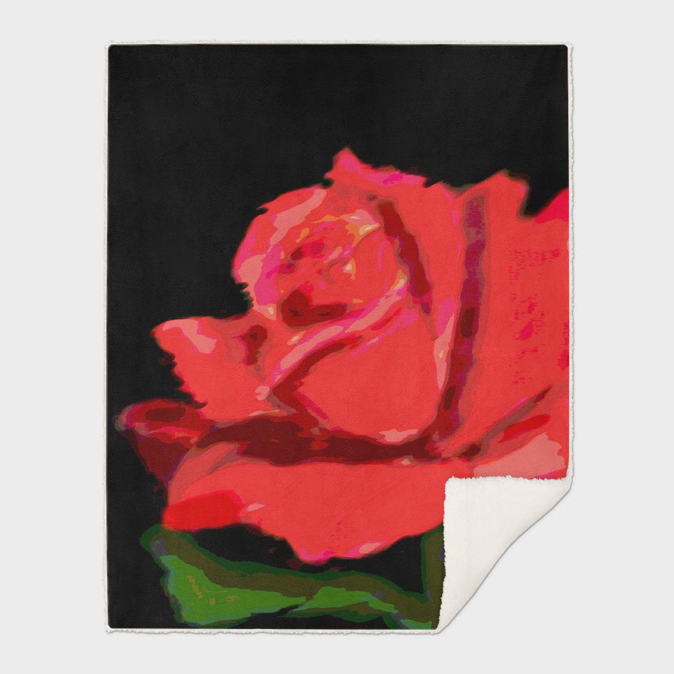 A Red Rose DPPA161128a-17