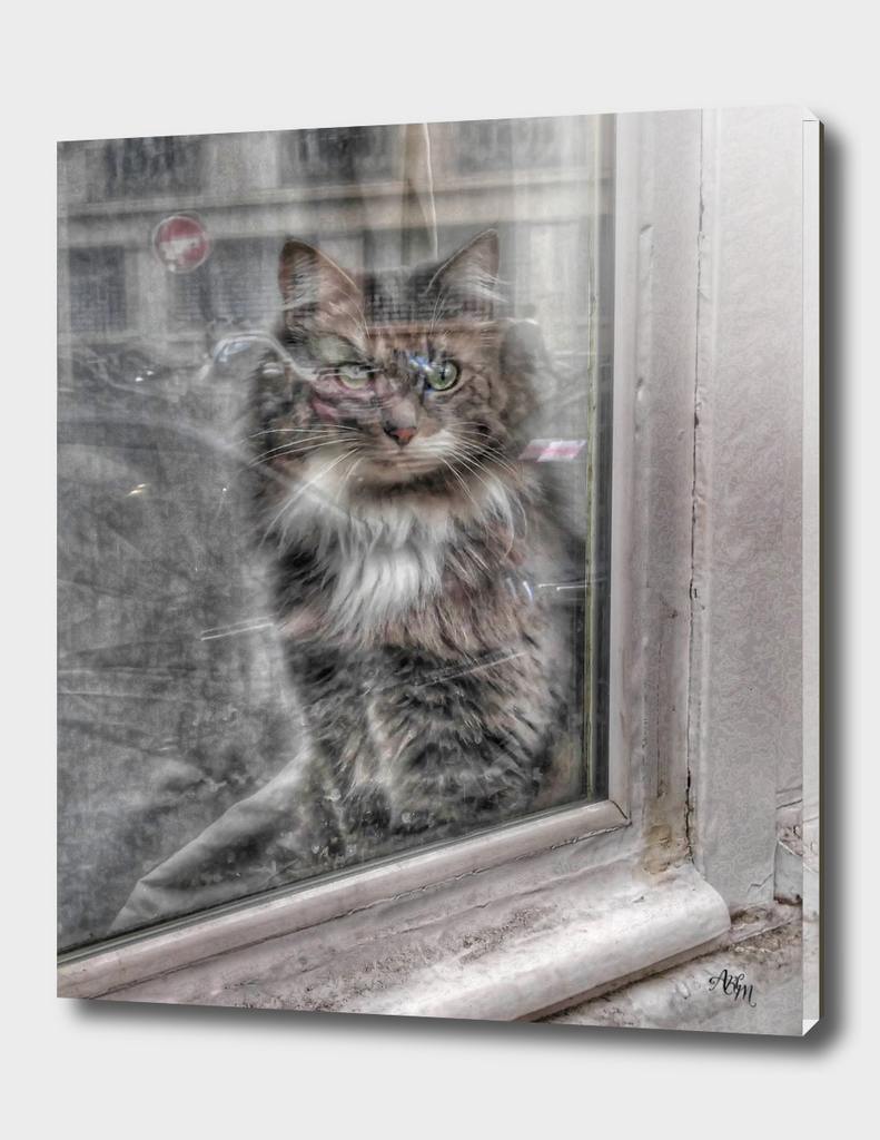 Furry Cat in Window in Paris
