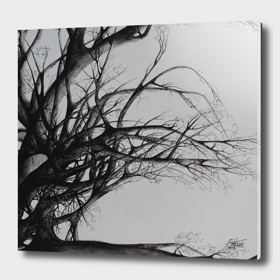 Tree - Declination XII