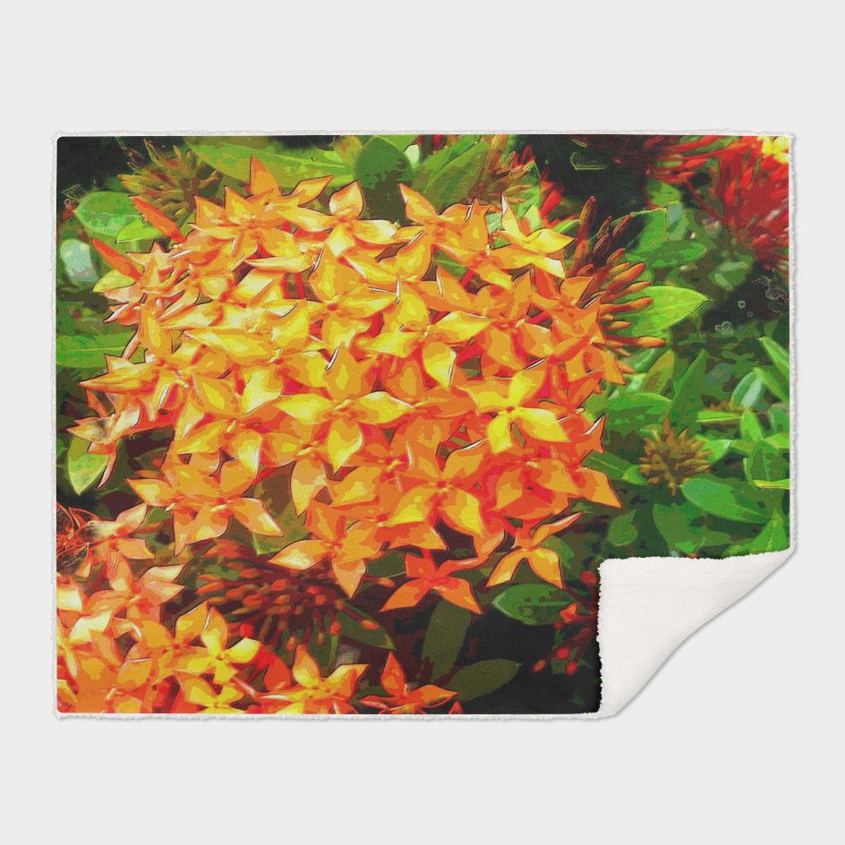 Orange Ixora DPPA161101e