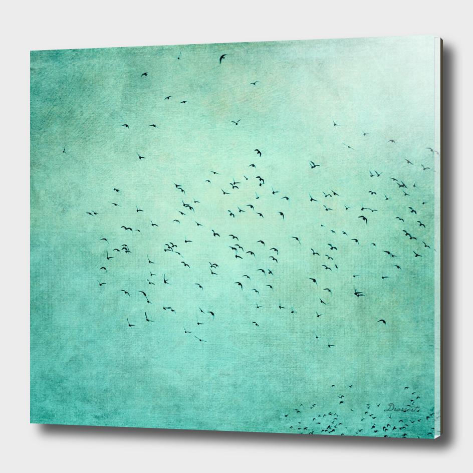birds IV
