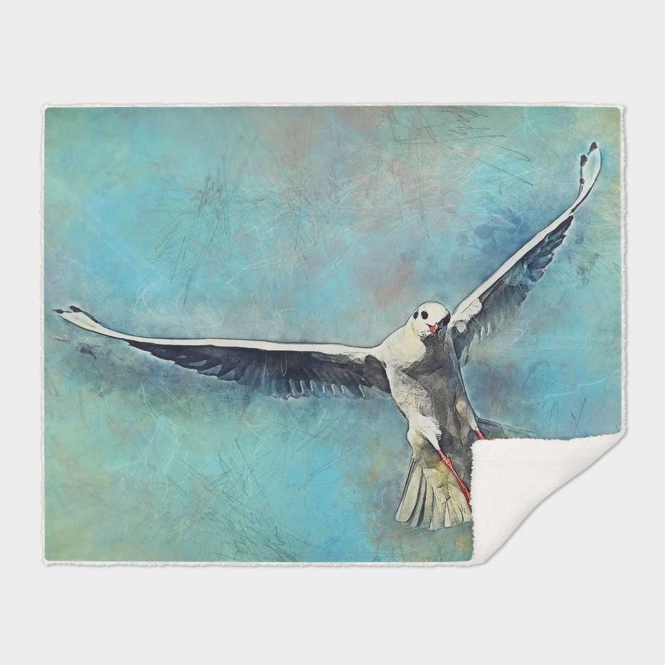 gull bird