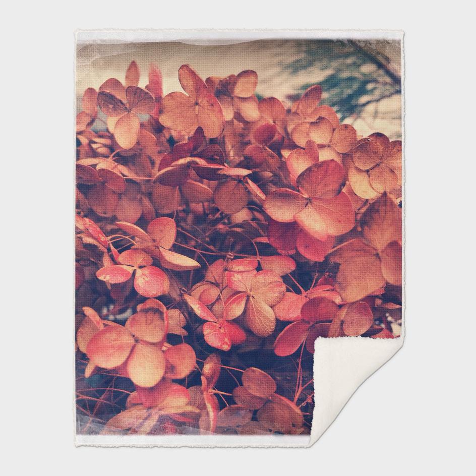 Dried Hydrangeas - Winter Bouquet