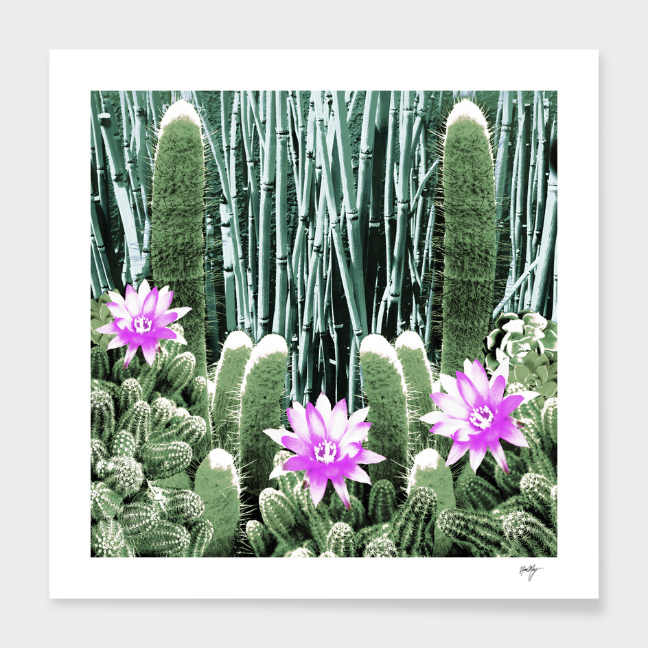 Cacti Bamboo Collage