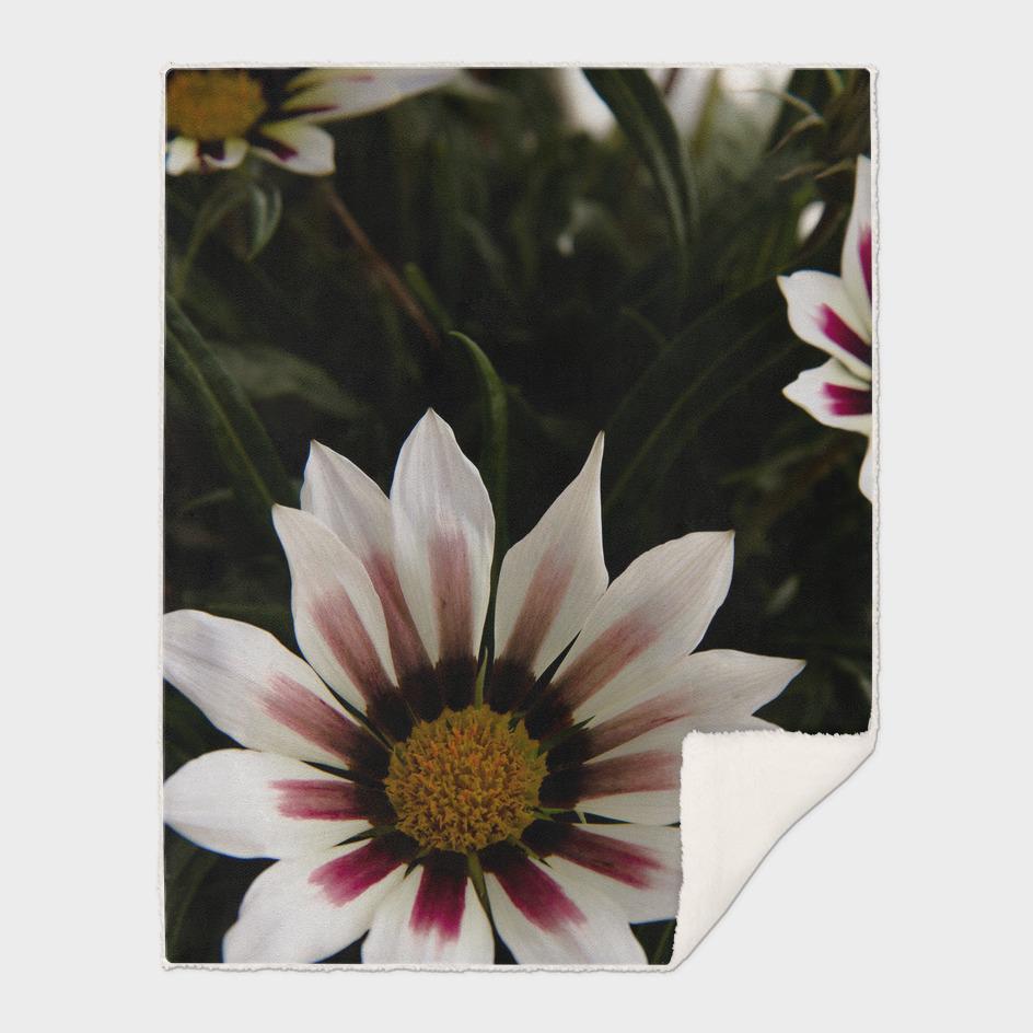 Flowers in summer