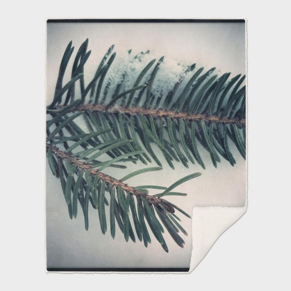Solstice - Pine Needles in Snow