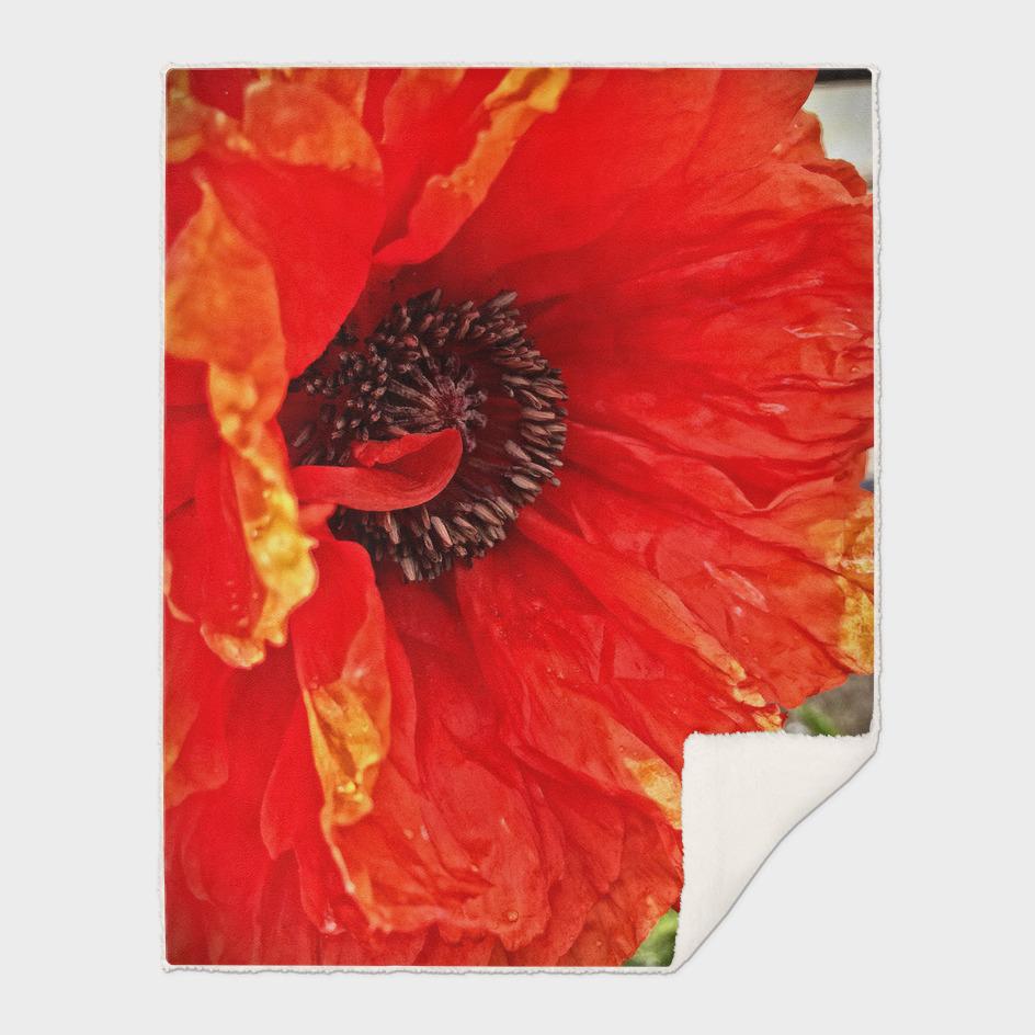 Bright Poppy, Side View